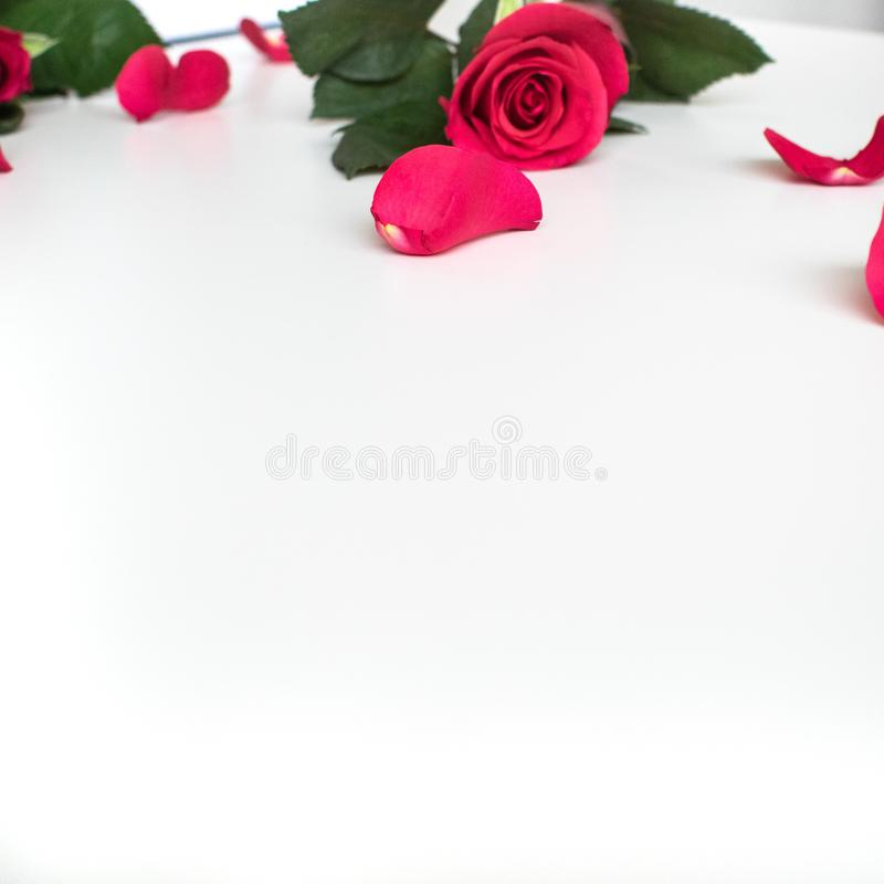 Rosa roja en una tabla blanca con los p?talos rojos imagen de archivo