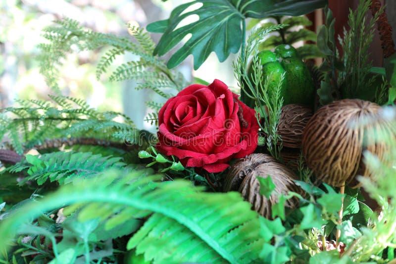 Rosa roja hermosa en florero foto de archivo