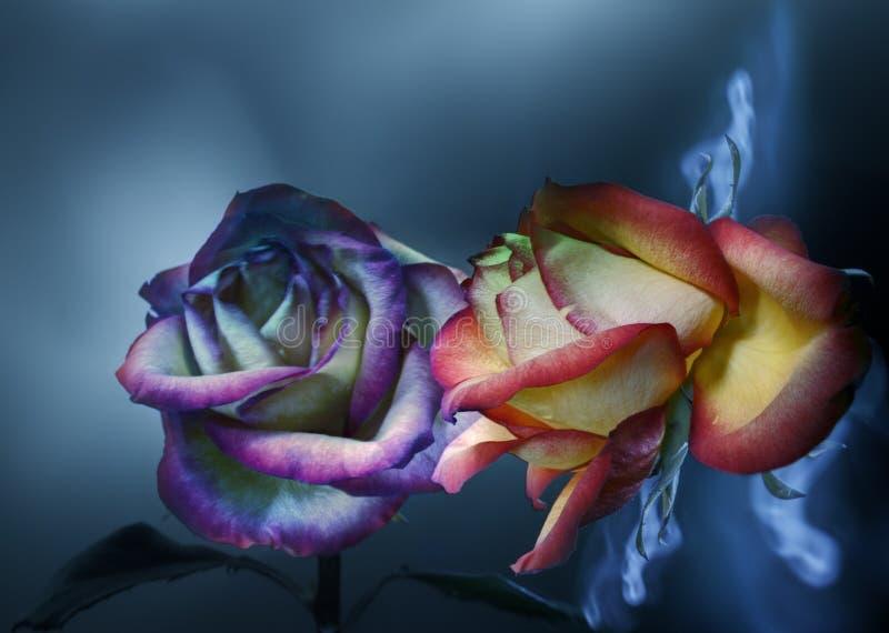 Rosa roja pintada por la luz y su reflexión en un fondo azul fotos de archivo
