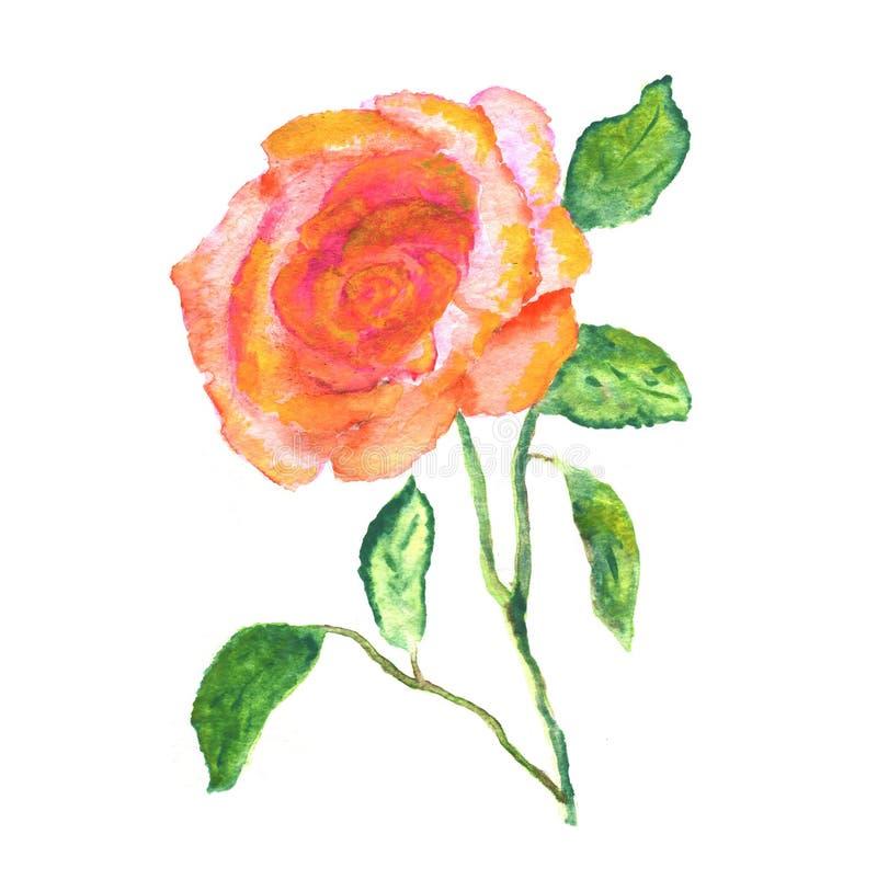 Rosa romántica del vintade de los ejemplos de la acuarela stock de ilustración