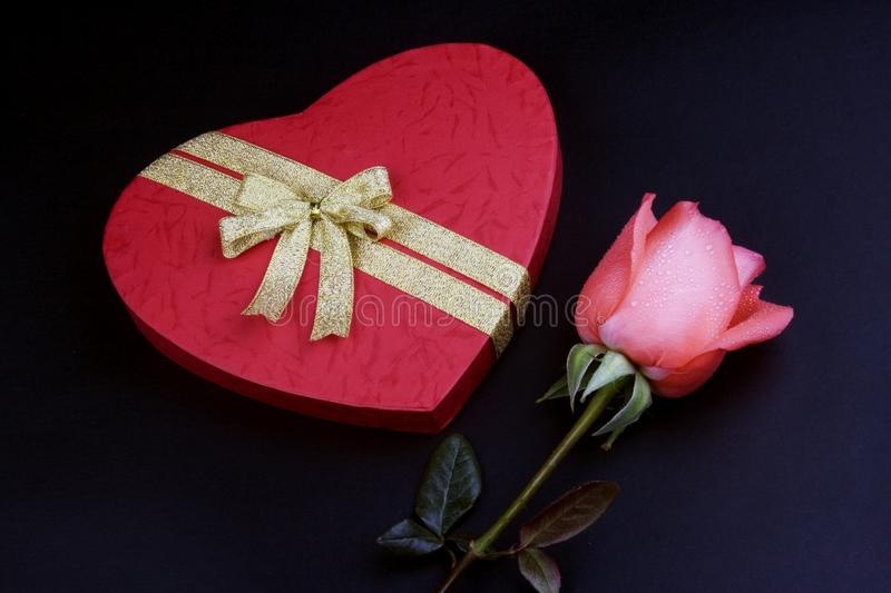 Rose With Gift Box rosa fotografie stock