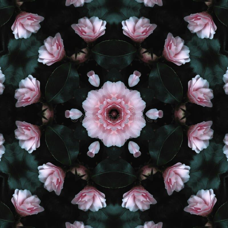 Rosa rosada y textura verde de las vidas imágenes de archivo libres de regalías