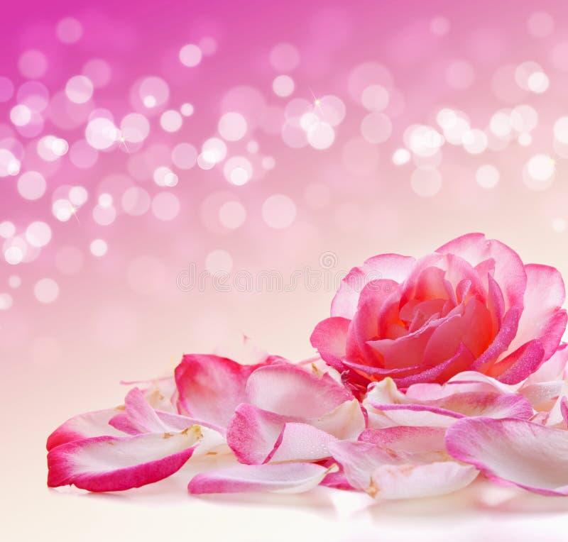 Rosa rosafarben und Blumenblätter stockfotos
