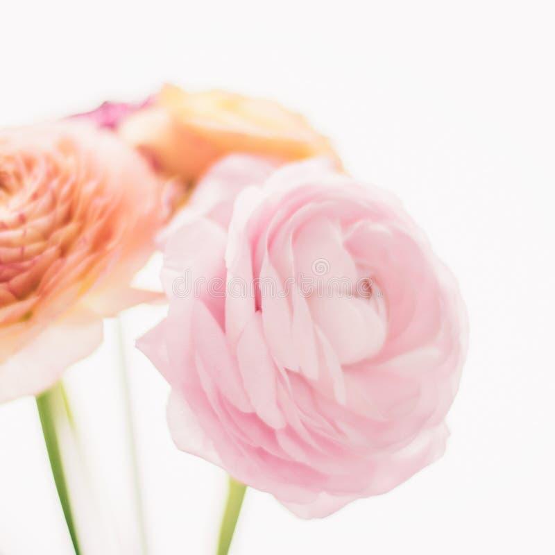 rosa rosafarbene Blumen vom Garten - Hochzeit, Feiertag und Blumengarten angeredetes Konzept stockbild