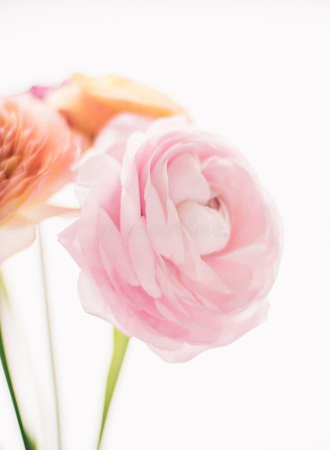 rosa rosafarbene Blumen vom Garten - Hochzeit, Feiertag und Blumengarten angeredetes Konzept stockfoto