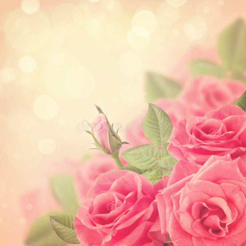 Rosa rosbokeh royaltyfria bilder
