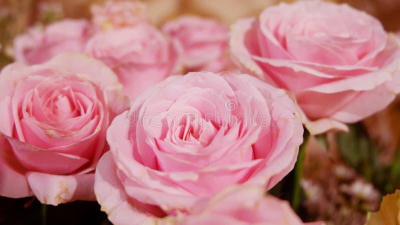 Rosa rosbukettbakgrund close upp royaltyfri foto