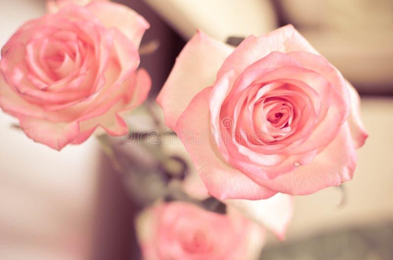 Rosa Rose Flowers på tabellen royaltyfria bilder