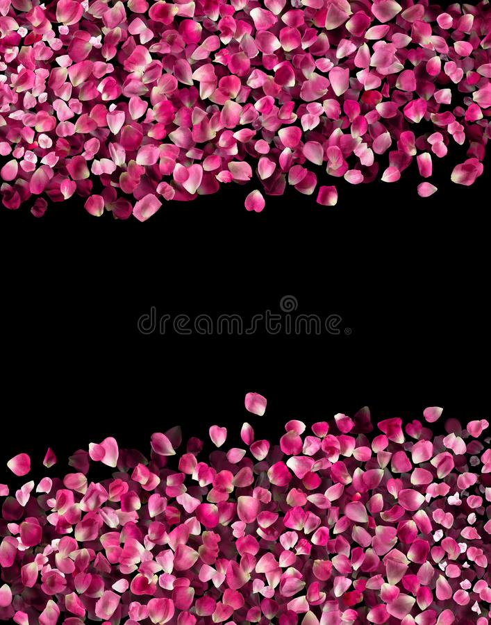 Rosa Rose Petals isolated on Black stock image