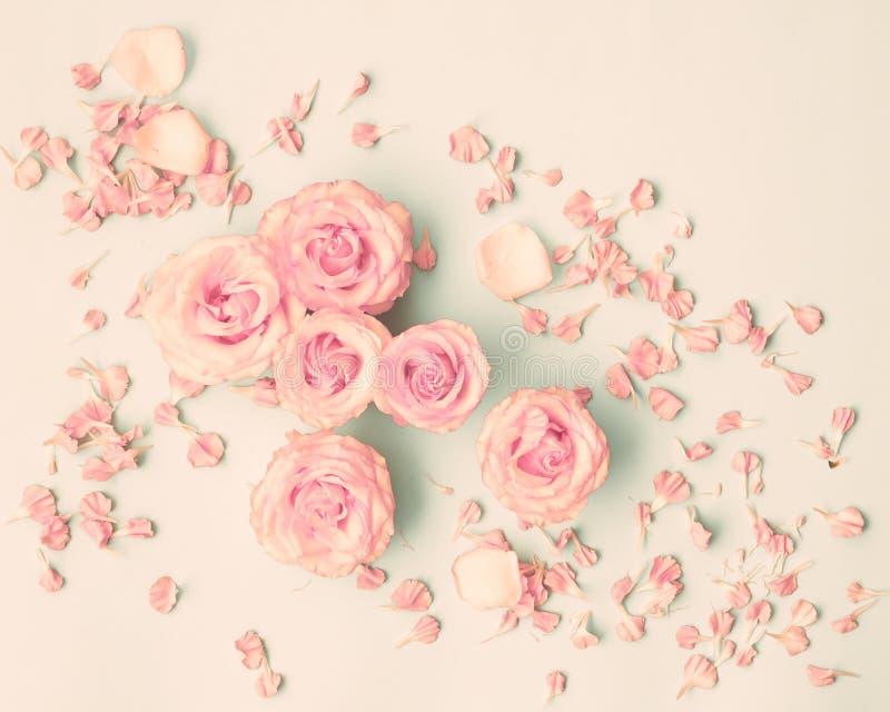 Rosa Rosen über Pastell lizenzfreie stockfotografie