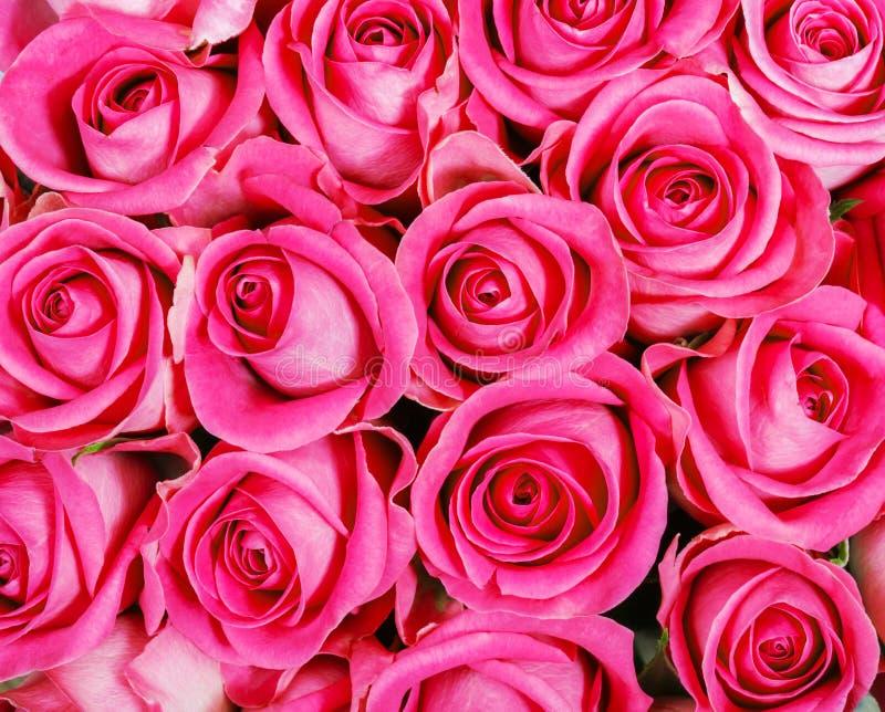 Rosa Rosen stockbild