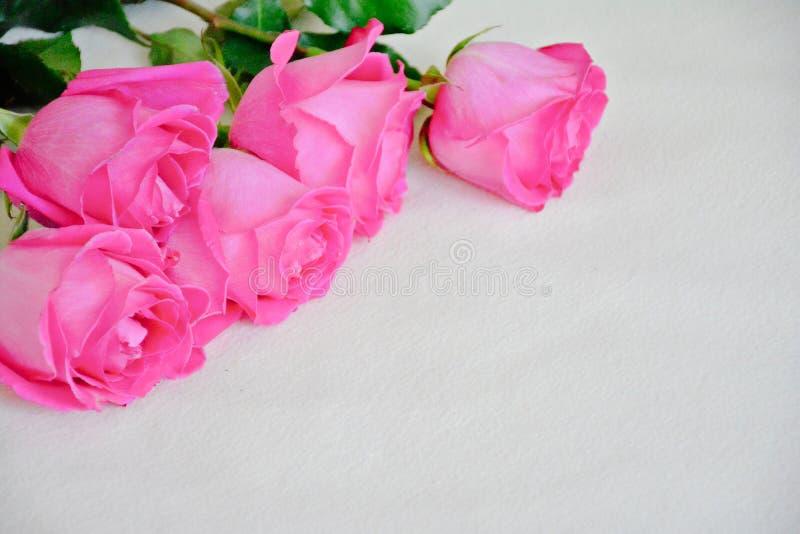 Rosa Rosen auf hellem Hintergrund, Schablone für Karte stockfoto