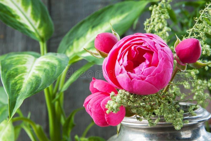 Rosa Rosen im alten silbernen Vase und in den Grünpflanzen stockfoto