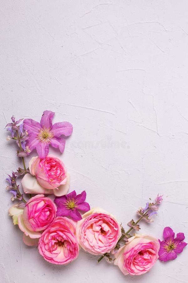 Rosa Rosen und violette Sommerklematis blühen auf grauem strukturiertem b stockfotografie