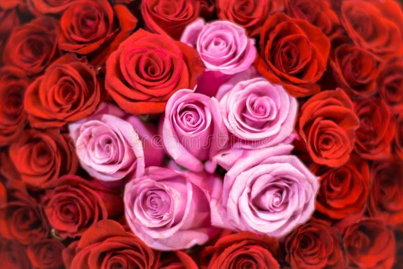 Rosa Rosen unter roten Rosen lizenzfreie stockfotos