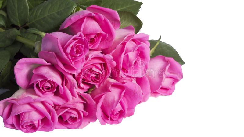 Rosa rosor arkivbild