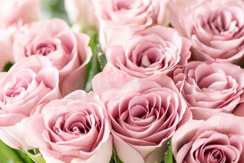 Rosa rosor i glass vaser Pastellfärgad färg för grupp begreppet av en blomsterhandlare i en blomsterhandel wallpaper fotografering för bildbyråer
