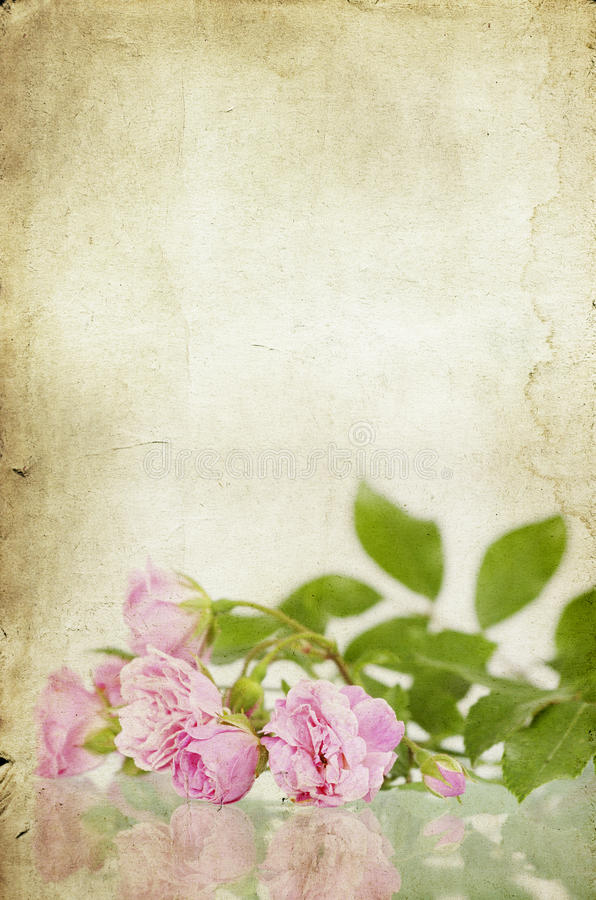 Rosa rosor på tappningpappersbakgrund arkivbild