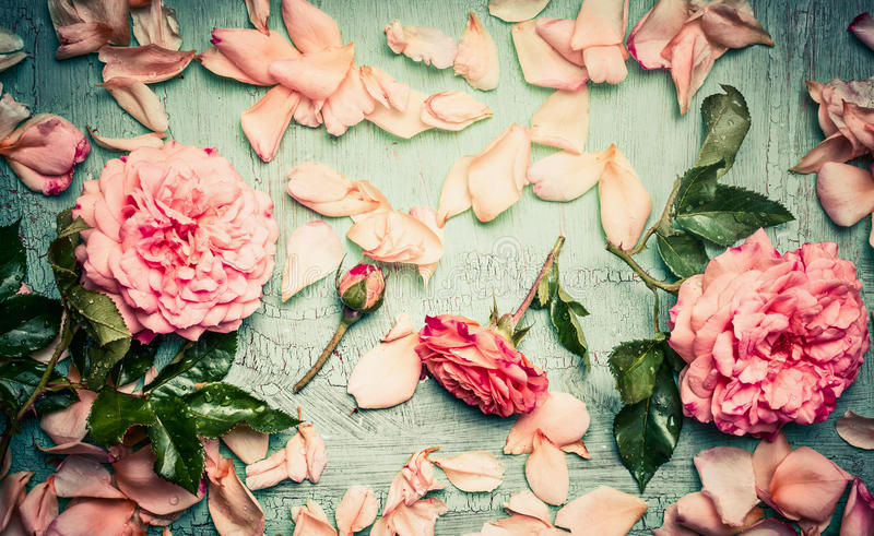 Rosa rosordningar med blommor kronblad och sidor på sjaskig chic bakgrund för turkos arkivbild