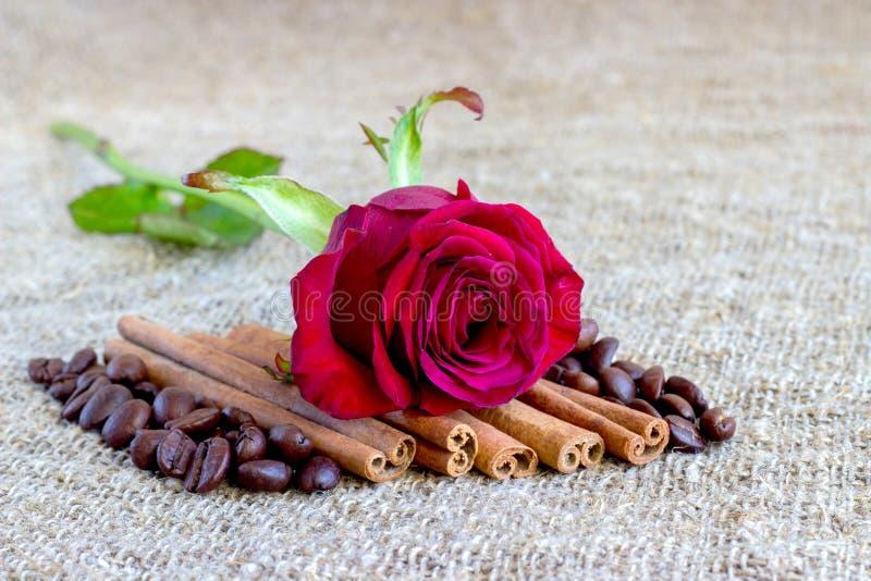 Rosa rossa, cannella, chicchi di caffè su un fondo marrone immagine stock libera da diritti