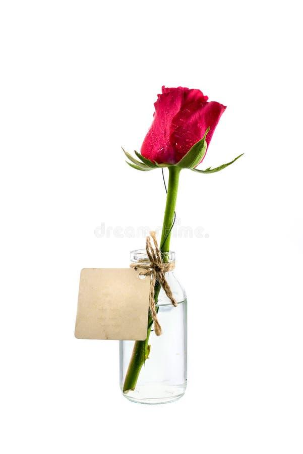 Download Rosa Rossa In Chiara Bottiglia Con L'etichetta Su Fondo Bianco Immagine Stock - Immagine di closeup, verde: 55363451