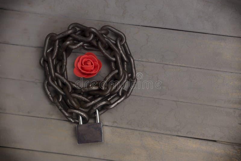 Rosa rossa incatenata e bloccata sui precedenti di legno immagine stock