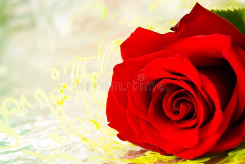 Rosa rossa per l'amica fotografia stock libera da diritti