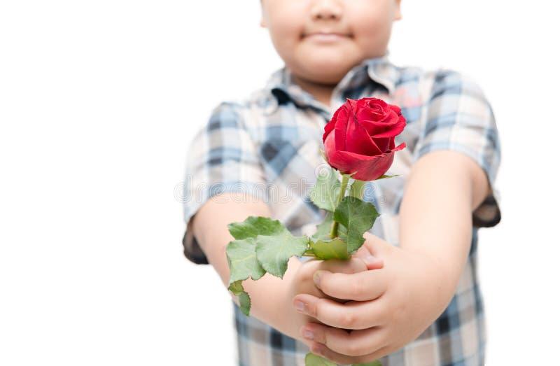 Rosa rossa in poco ragazzo della mano isolato immagine stock libera da diritti