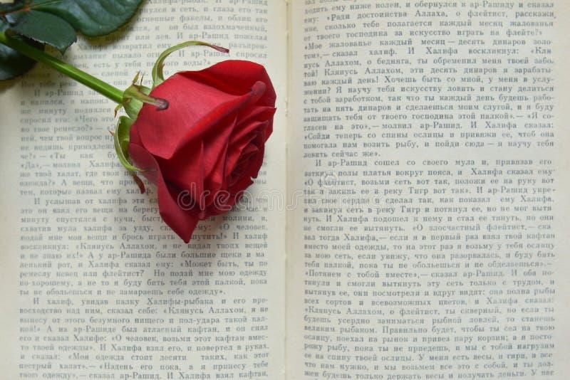 Rosa rossa sul libro aperto fotografia stock