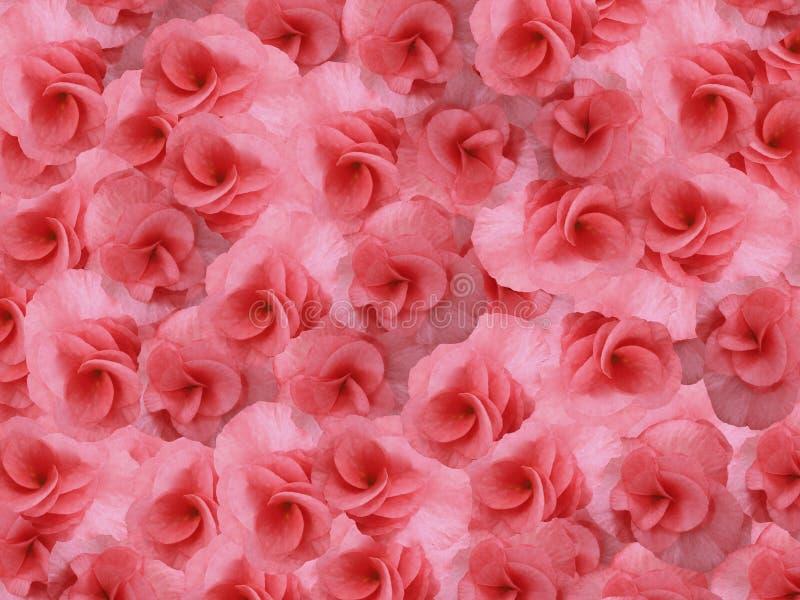 Rosa-rosso luminoso del piccolo geranio dei fiori Priorità bassa dei fiori Per il disegno fotografie stock libere da diritti