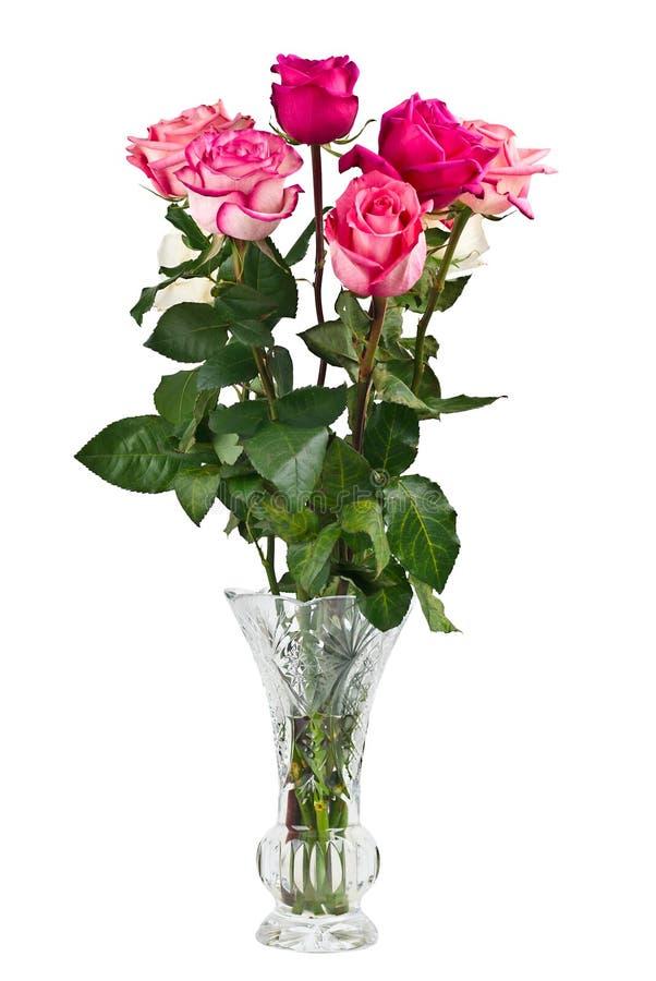 rosa rovase för grupp royaltyfria bilder
