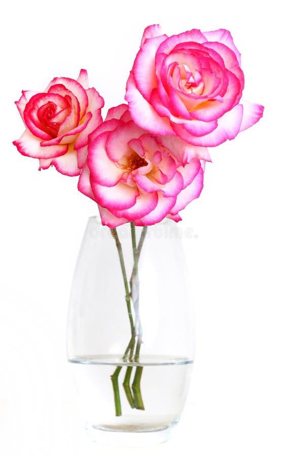 rosa rovasevatten royaltyfria foton