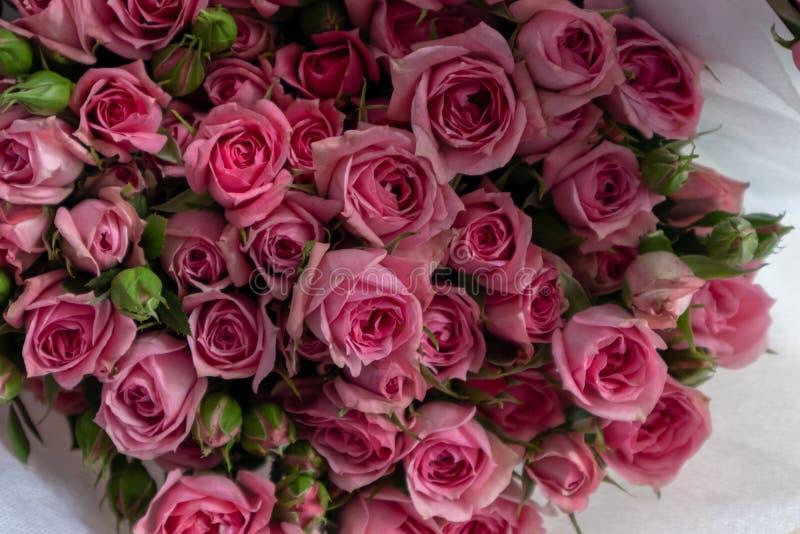 Rosa rugosa thunb-Verse snijbloemen stock afbeelding