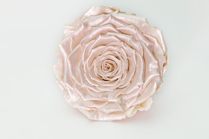 Rosa Satin-Vintage-Rose, perlmuttfarbene, auf Weiß isolierte Blüte lizenzfreie stockfotos