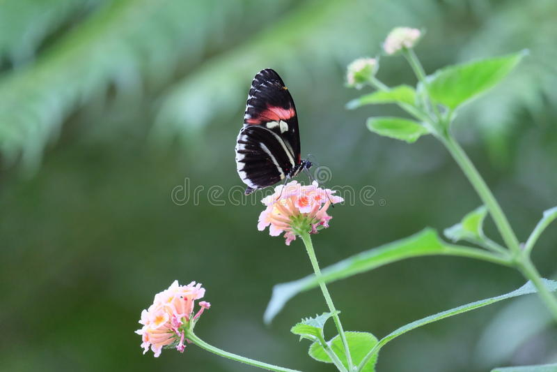 Rosa Schönheitsblume stockfoto