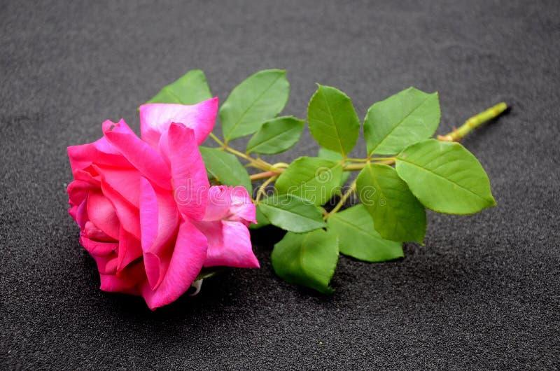 Rosa schwarzersand arkivfoto
