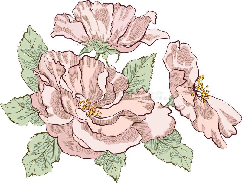 Rosa selvagem ilustração stock
