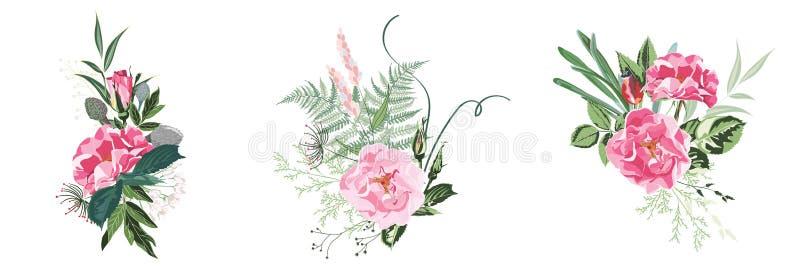 Rosa selvatica, fiori del giardino di rosa canina di canina di rosa, felce e grande raccolta di vettore delle erbe illustrazione vettoriale