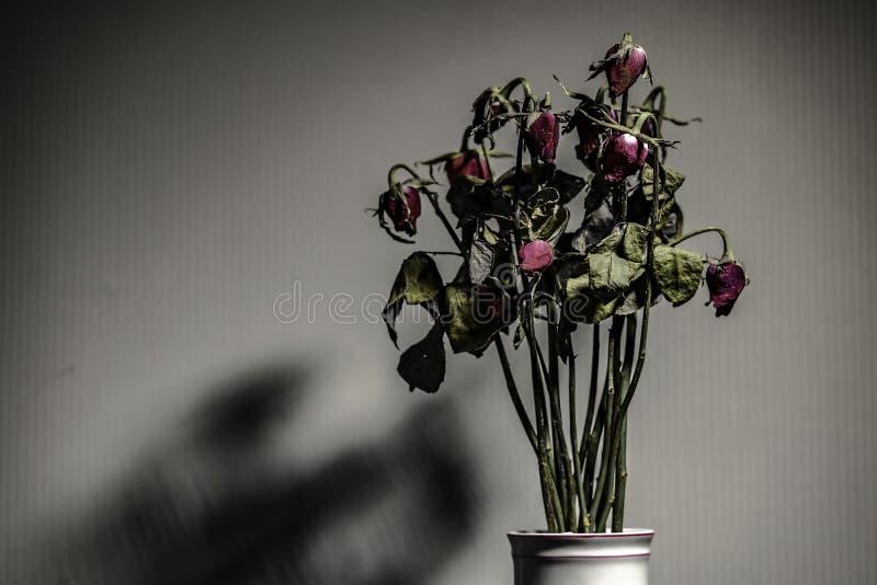 Rosa si è asciugata in un vaso ceramico Sinistra nella stanza con le ombre Fuoco molle immagini stock