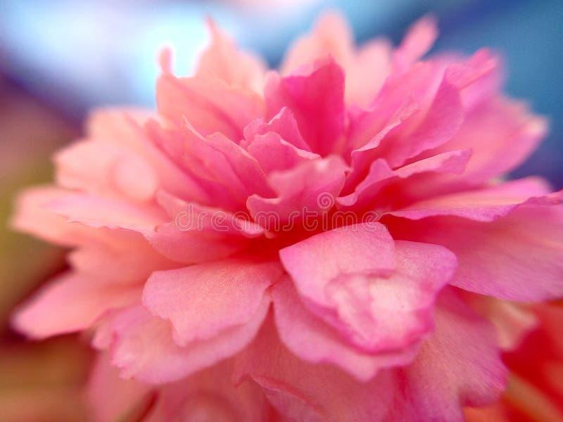 Rosa sidopic för kines arkivfoton