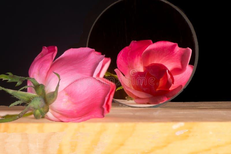 Rosa rosa singola con la sua riflessione in uno specchio circolare fotografie stock