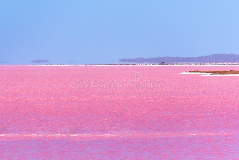 Rosa sjö bredvid Gregory i västra Australien med hägring på horisonten royaltyfri bild