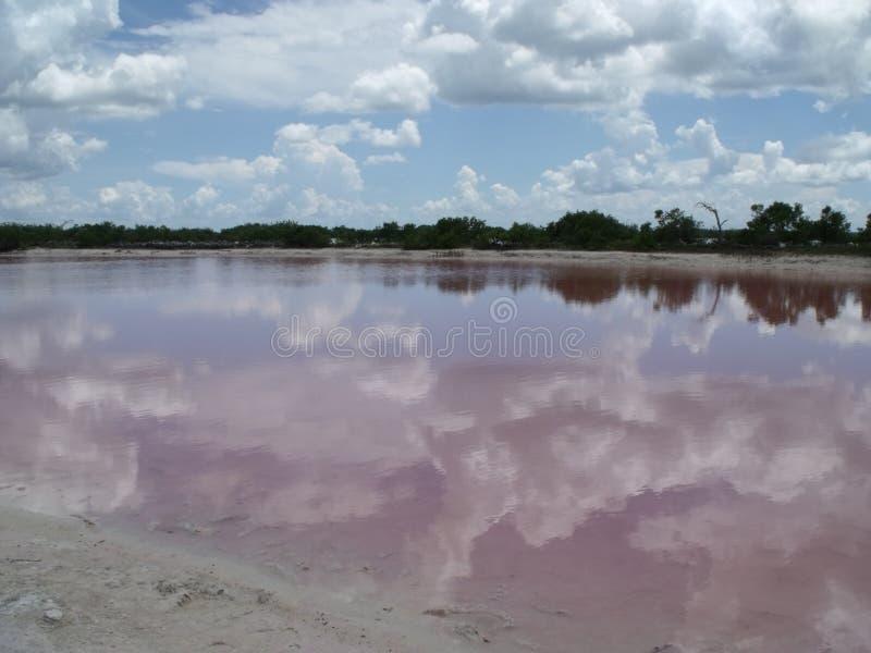 Rosa sjöar nära Progreso Yucatan, Mexico royaltyfri fotografi