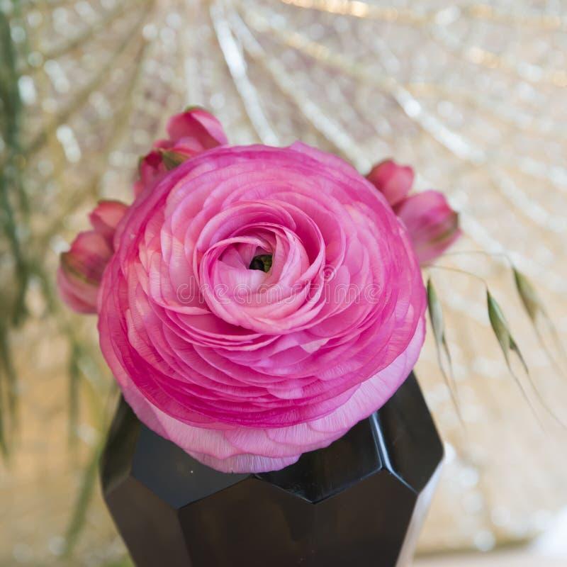 Rosa smörblomma royaltyfria bilder