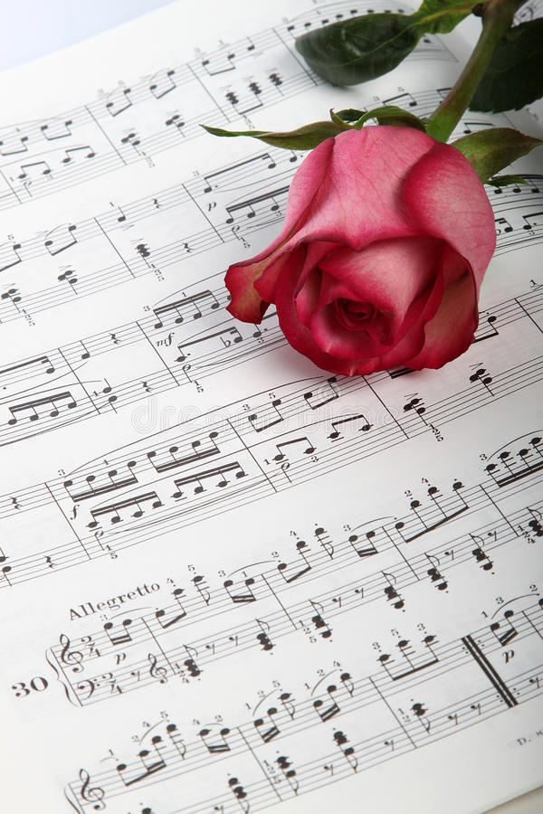 Rosa stieg auf Blattmusik lizenzfreies stockbild