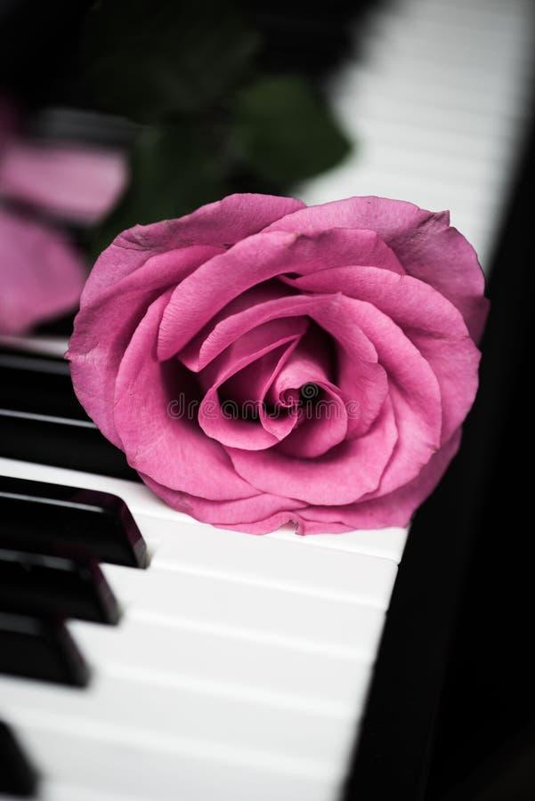 Rosa stieg auf Klaviertasten lizenzfreie stockbilder