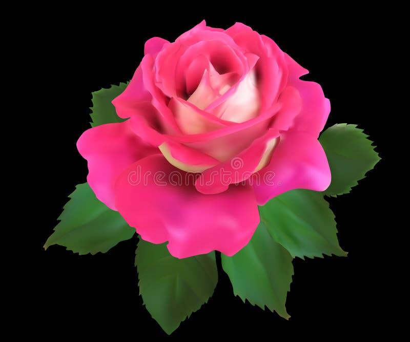 Rosa stieg Blume mit grünen Blättern auf Schwarzem stock abbildung
