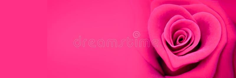 Rosa stieg in Form eines Herzens, Valentinsgrußtagesfahne lizenzfreie stockfotografie