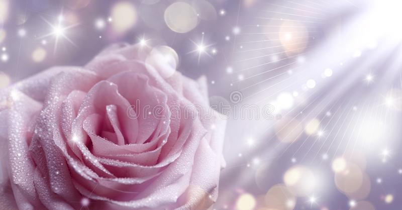 Rosa stieg, Funkeln, die Liebe, Romanze, Hochzeit, der Valentinstag, hell, Sonnenstrahl, bokeh, unscharfer Hintergrund, die Weich stock abbildung