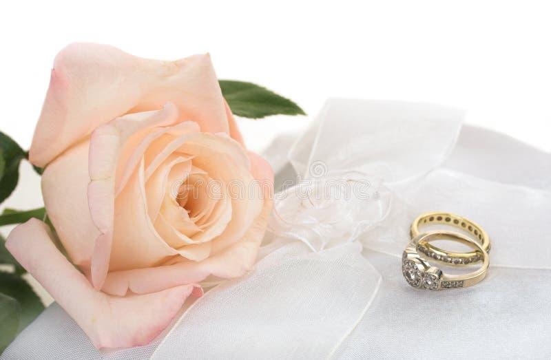 Rosa stieg mit Ringen stockfoto